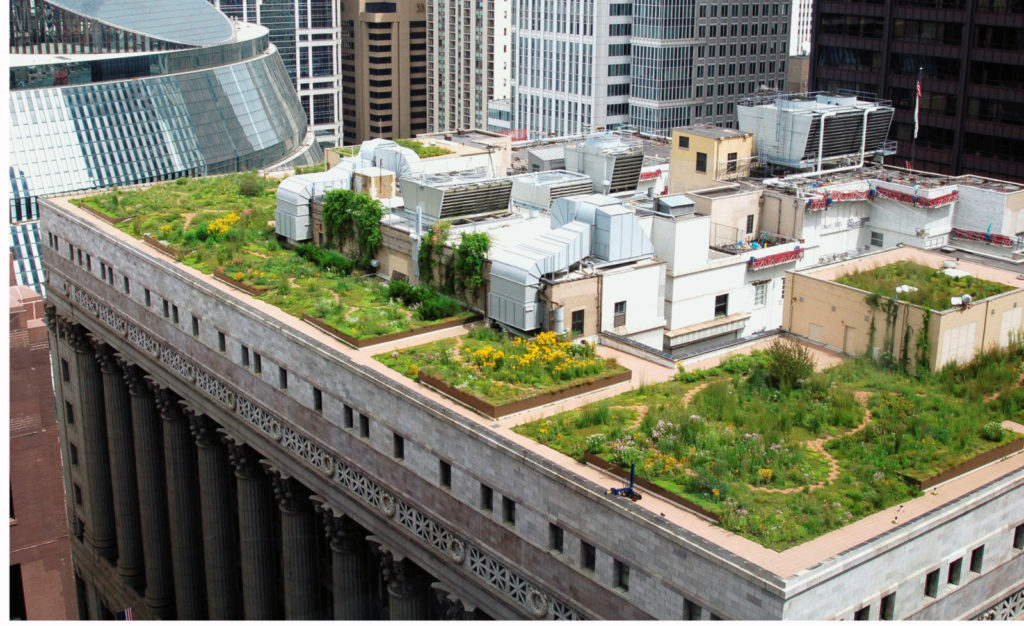 Green roof on the Chicago city hall